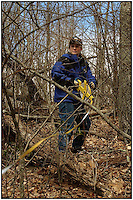 Women in construction and surveying. A woman uses a tape measure to mark off a building footprint in a wooded area. Model release.