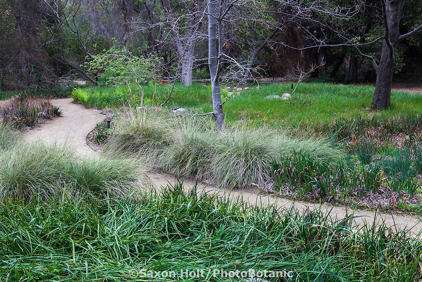 Path through meadow of California native grasses at California Botanic Garden