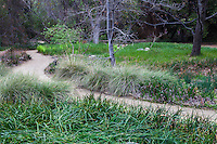 Path through meadow of California native grasses at California Botanic Garden