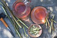 Weidenrinden-Tee, Weidenrindentee, Weiden-Tee, Weidentee, Tee aus Weidenrinde, Kräutertee, Heiltee, Rindentee, Weiden-Rinde, Rinde von einer Weide wird in Streifen abgzogen, Weide, Weiden, Salix spec., Sallow, Willow, rind, bark, tea, herb tea, herbal tea