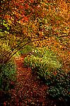 Trail winding through fall leaves toward beach in Mairine View Park, King County, WA