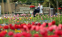 Pictured: A array of colourful tulips at the Singleton Park Botanic Garden in Swansea, south Wales, UK. Friday 06 May 2016<br /> Re: Warm and sunny weather has been forecast for most of the UK.