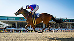 OLDSMAR, FL - JANUARY 21: No Fault of Mine #3, (blue cap), ridden by Daniel Centeno, crosses the finish line and wins the 33rd running of the Wayward Lass Stakes, on Skyway Festival Day at Tampa Bay Downs on January 21, 2017 in Oldsmar, Florida. (Photo by Douglas DeFelice/Eclipse Sportswire/Getty Images)