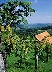 Austria, Styria, near Leutschach: wine-growing estate at South-Styrian Wine Route