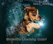 REALISTIC ANIMALS, REALISTISCHE TIERE, ANIMALES REALISTICOS, dogs, paintings+++++SethC_Ginger_IMG_0901rev2SMOOTH,USLGSC34,#A#, EVERYDAY ,underwater dogs,photos,fotos ,Seth