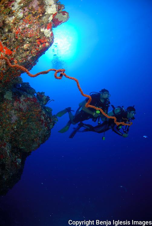 Two divers behing wire coral at back wall molokini Maui Hawaii.