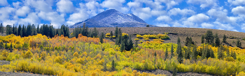 Hillside with fall color and mixed forest. Eastern Sierra Nevada mountains, California