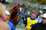 31 October 2009: A horse is led to the paddock where the command for rider's up will be given before the start of the third race at Keeneland.