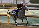 Irrefutable, trained by Bob Baffert and to be ridden by Rafael Bejarano , exercises in preparation for the 2011 Breeders' Cup at Churchill Downs on.October 30, 2011.
