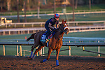 OCT 29 2014:Main Sequence, trained by Graham Motion, exercises in preparation for the Breeders' Cup Turf at Santa Anita Race Course in Arcadia, California on October 29, 2014. Kazushi Ishida/ESW/CSM