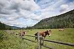 Eight Mile Ranch is a U.S. Forest Service facility used both as fire base and as home for mules used in accessing the back country of the North Cascade Mountains and Pasayten Wilderness.  The Chewuch River runs from the Pasayten Wilderness in the North Cascade Mountains toward the Methow River at the village of Winthrop, where the two merge to drain throught the Methow Valley to the mighty Columbia at Lake Pateros.