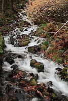 Wahkeena Falls, Oregon in fall colors.