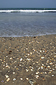 The Gambia. Sea shells on the beach.