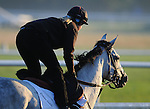 29 August 10: Morning workouts at Saratoga Race Course in  Saratoga Springs, New York.