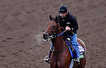 ARCADIA, CA - OCT 31: Twilight Eclipse, owned by West Point Thoroughbreds, Inc. and trained by Thomas Albertrani, exercises in preparation for the Breeders' Cup Longines Turf at Santa Anita Park on October 31, 2016 in Arcadia, California. (Photo by Scott Serio/Eclipse Sportswire/Breeders Cup)