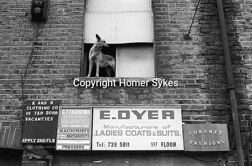 Sweatshop sign board and dog. Whitechapel, near Brick lane, East London England 1974
