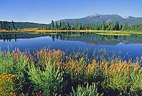 released rustic cabin Hammond Lake California