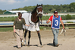 September 1, 2014: Smarty Jones Stakes contender Albano enters the paddock. Protonico, Joe Bravo up, wins the grade 3 Smarty Jones Stakes at Parx Racing in Bensalem, PA. Trainer is Todd Pletcher. Owner is International Equities Holding, Inc. ©Joan Fairman Kanes/ESW/CSM