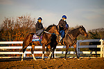 October 31, 2020: Calibrate, trained by trainer Steven M. Asmussen, exercises in preparation for the Breeders' Cup Juvenile at Keeneland Racetrack in Lexington, Kentucky on October 31, 2020. Alex Evers/Eclipse Sportswire/Breeders Cup