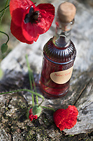 Mohnblüten-Sirup, Mohnsirup, Mohn-Sirup, Sirup aus Mohn, Mohnblütensirup, Hustensirup, Husten-Sirup, Kräutersirup, Kräuter-Sirup, Klatsch-Mohn, Klatschmohn, Mohn, Papaver rhoeas, Corn Poppy, Field Poppy, flowers, blossoms, syrup, Le coquelicot