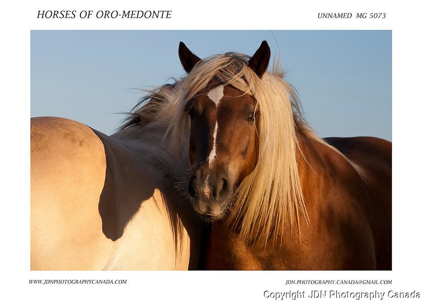 Horses of Oro-Medonte