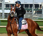 April 21, 2014 My Miss Sophia jogs at Churchill Downs in preparation for the Kentucky Oaks.  She is owned by Mathis Stable LLC and trained by Todd Pletcher.  She was the winner of the Gazelle Stakes at Oaklawn Park.