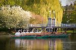 Springtime, the Swan boats in Boston Public Garden, Back Bay, Boston, MA