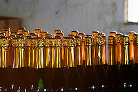 Bottles of sparkling wine, bottle necks with golden metal foil cover. Bodega Carlos Pizzorno Winery, Canelon Chico, Canelones, Uruguay, South America