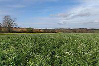 14.11.2020 Cover crop <br /> ©Tim Scrivener Photographer 07850 303986<br />      ....Covering Agriculture In The