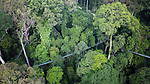 Canopy walkway through lowland Dipterocarp rainforest. Danum Valley, Sabah, Borneo.