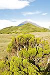 Pico's cone.  Pico island