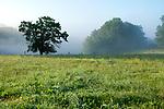 Europa, DEU, Deutschland, Hessen, Landkreis Fulda, Morgenstimmung, Nebel im Fuldatal, Kategorien und Themen, Natur, Umwelt, Landschaft, Jahreszeiten, Stimmungen, Landschaftsfotografie, Landschaften, Landschaftsphoto, Landschaftsphotographie, Wetter, Wetterelemente, Wetterlage, Wetterkunde, Witterung, Witterungsbedingungen, Wettererscheinungen, Meteorologie, Wettervorhersage<br /> <br /> [Fuer die Nutzung gelten die jeweils gueltigen Allgemeinen Liefer-und Geschaeftsbedingungen. Nutzung nur gegen Verwendungsmeldung und Nachweis. Download der AGB unter http://www.image-box.com oder werden auf Anfrage zugesendet. Freigabe ist vorher erforderlich. Jede Nutzung des Fotos ist honorarpflichtig gemaess derzeit gueltiger MFM Liste - Kontakt, Uwe Schmid-Fotografie, Duisburg, Tel. (+49).2065.677997, ..archiv@image-box.com, www.image-box.com]