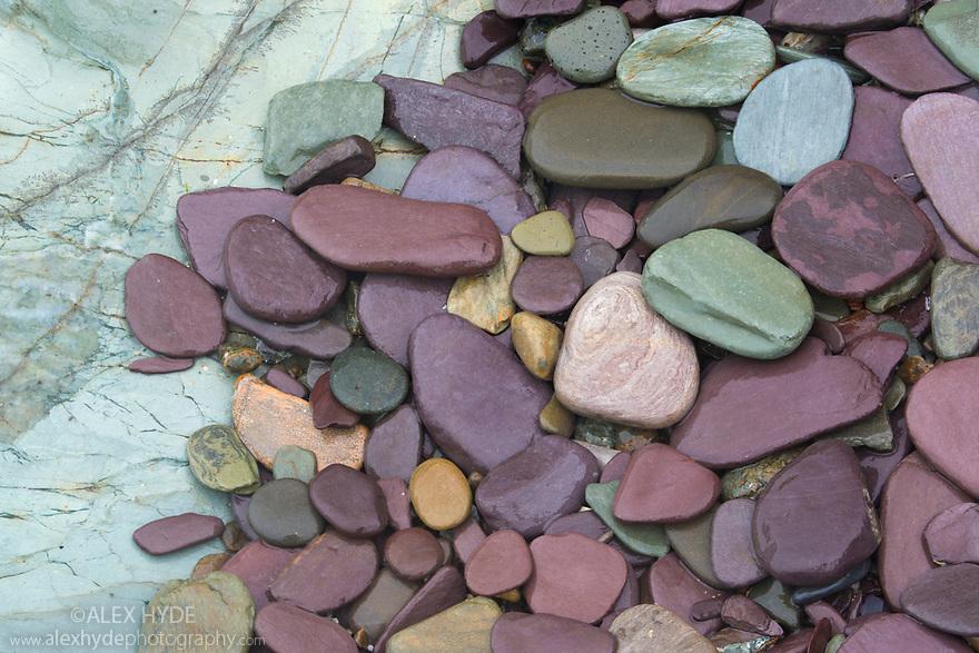 Purple and green slate, DAymer Bay, Cornwall, UK. May.