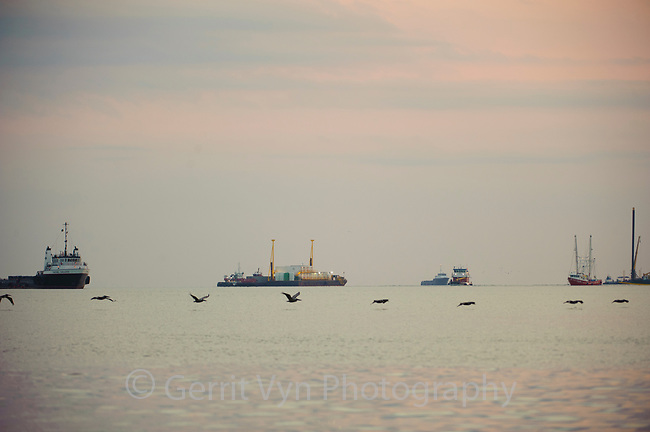 Brown Pelicans and Gulf oil spill response vessels. Jefferson Parish, Louisiana. July 2010.