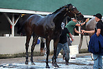 LOUISVILLE, KY - APRIL 25: Nickname (Scat Daddy x Nina Fever, by Borrego) is bathed after exercising at Churchill Downs to prepare for the Kentucky Oaks. Owner LNJ Foxwoods, trainer Steven M. Asmussen. (Photo by Mary M. Meek/Eclipse Sportswire/Getty Images)
