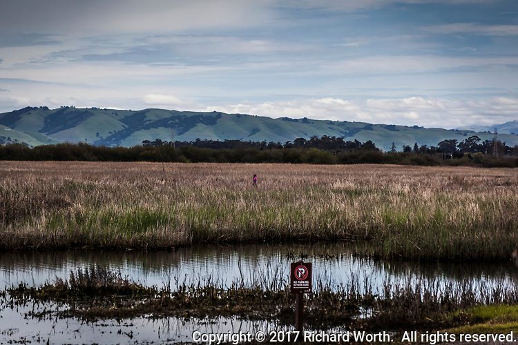 Cloud filtered sky, green foothills.  Wetland grasses and a lone runner, training for the next race.  Coyote Hills Regional Park.