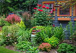 Vashon-Maury Island, WA: Summer perennial garden and potting shed featuring barberries, roses, sedum, persicaria and lilies