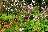Mixed flowers garden. Gardens at Domoland Castle. Ireland