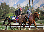 October 26, 2014: Brown Panther exercises in preparation for the Breeders' Cup Turf at Santa Anita Park in Arcadia, California on October 26, 2014. Zoe Metz/ESW/CSM