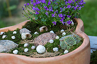 Wildbienen-Nisthilfe mit Schneckengehäusen, Schneckengehäuse, Schneckenhaus, Schneckenhäusern, verschieden große, leere Schneckenhäuser werden in eine Schale gelegt. Die Pflanzschale, Blumenschale wird bepflanzt und mit Moos und Steinen dekoriert. Trockene Kiefernadeln dienen Wildbienen als Tarnmaterial. Schnirkelschnecken. Wildbienen-Nisthilfen, Wildbienen-Nisthilfe selbermachen, selber machen, Wildbienenhotel, Insektenhotel, Wildbienen-Hotel, Insekten-Hotel