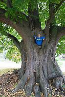 """Linde, Dorflinde, Dorf-Linde, """"Teich-Linde"""", """"Teichlinde"""" in Herstelle, Weserbergland, mit Kind, Junge als Größenvergleich, 350 Jahre alt, Sommer-Linde, Sommerlinde, Linde, Tilia platyphyllos, Tilia grandifolia, large-leaved lime, Large Leaved Lime, largeleaf linden, large-leaved linden, lime, linden, Le tilleul à grandes feuilles"""