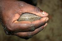 Harvesting Mudshells in the Gulf Of Carpentaria