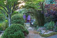 Gravel path leading to secret garden room past Cistus ladanifer var. sulcatus 'Mallorca', (Rockrose) in front of Arctostaphylos pajaroensis (Pajar Manzanita) shrubs with Restio rhodocoma capensis (Giant Cape Restio) in Shelagh Tucker garden, Seattle, Washington