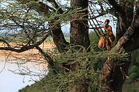 Traditional Beekeeping Ethiopia
