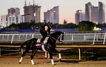 January 22, 2021: Independence Hall exercises as horses prepare for the 2021 Pegasus World Cup Invitational at Gulfstream Park in Hallandale Beach, Florida. Scott Serio/Eclipse Sportswire/CSM