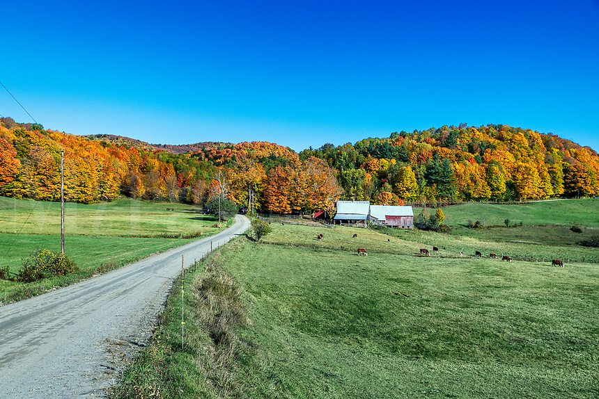 Idyllic autumn farm, Reading, Vermont, USA.