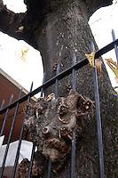 Tronco di albero che cresce intorno a un cancello. Trunk of tree that grows around a gate..