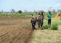 ZAMBIA, Mazabuka, Chikankata area, farming with ox