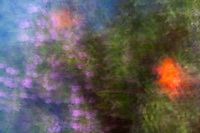 Colors - orange and green, puple and hints of blue.  Abstract from reality.