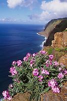 Küste bei Ponta do Pargo, Madeira, Portugal